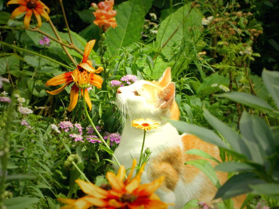 Хороши цветочки)) - ольга хадыкина