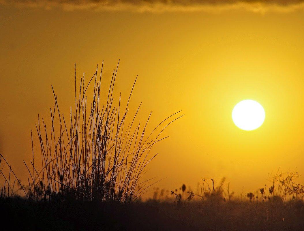 Белое солнце рассвета.... - владимир