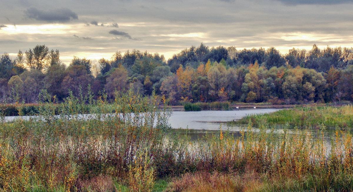 Осенний пруд - лиана алексеева