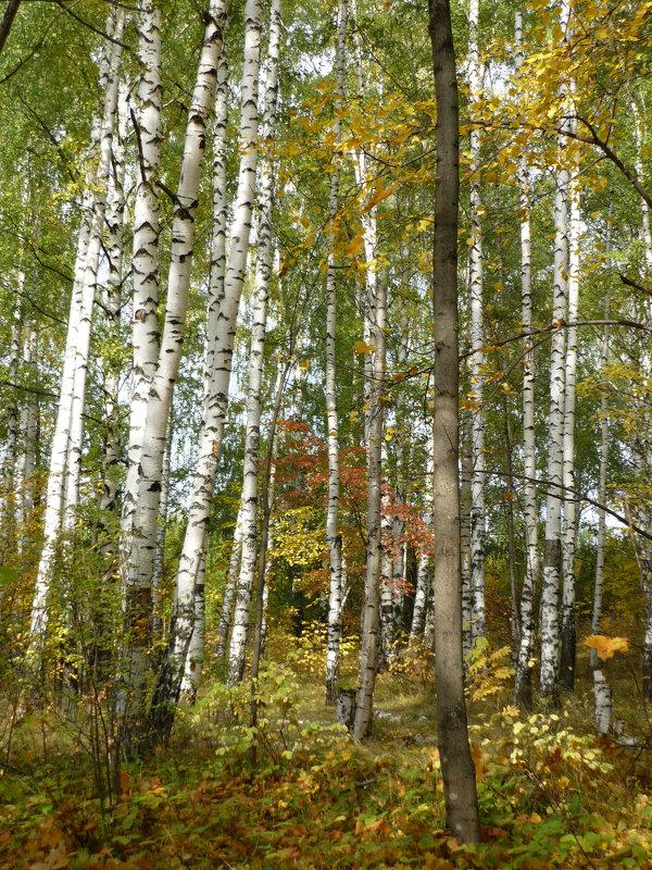Сентябрьский лес - Ольга