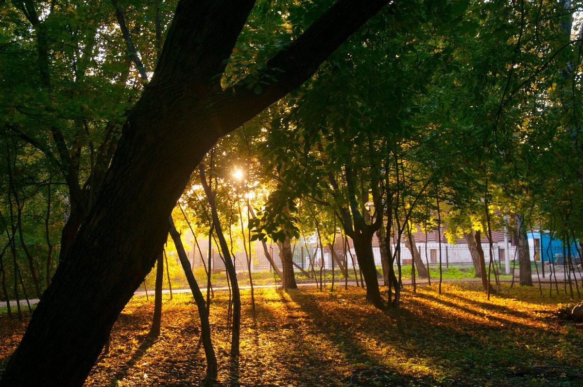 Осенний вечер в парке - Albina
