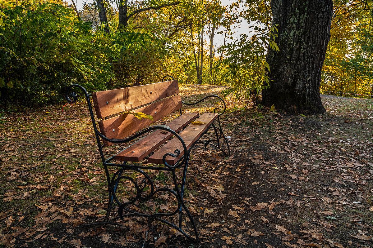 Осеннее: скамейка под старым дубом - Андрей Поляков