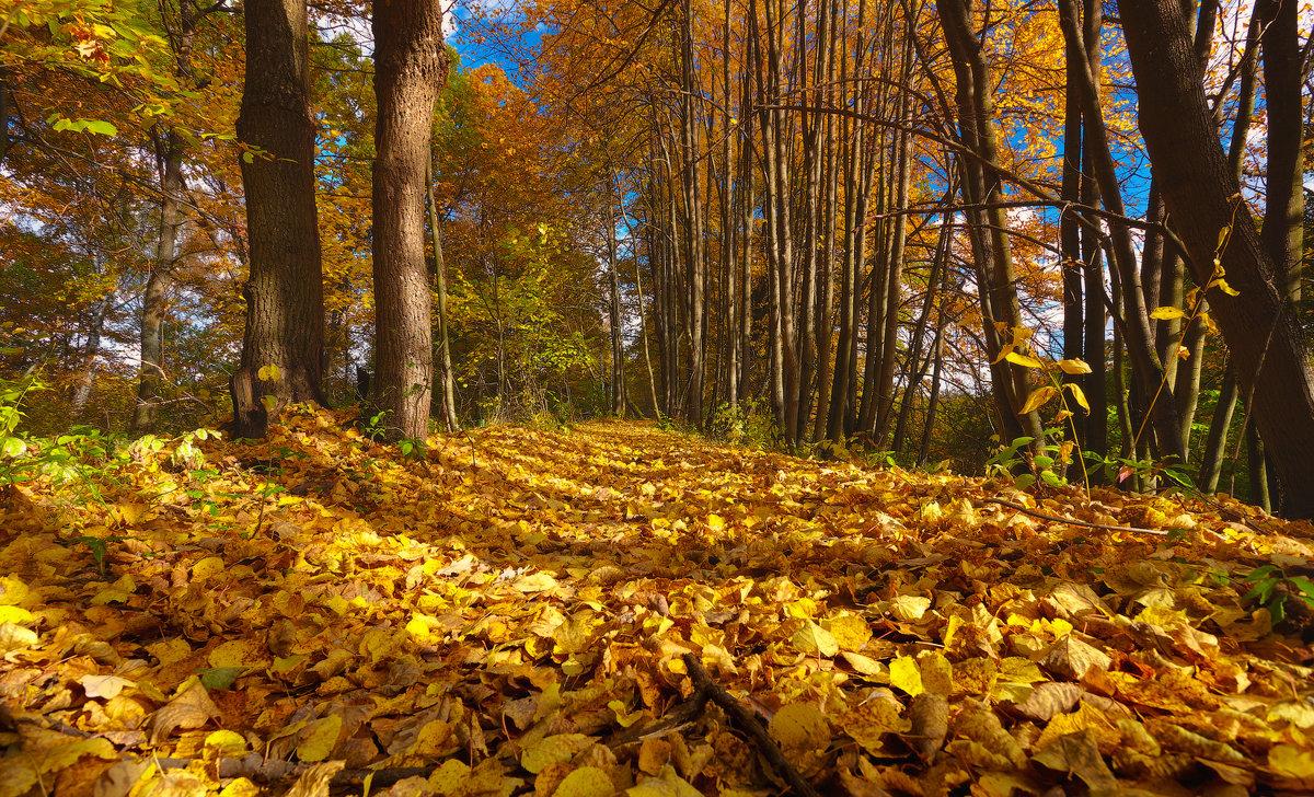 Листья жёлтые,скажите,что вам снится...© - Roman Lunin