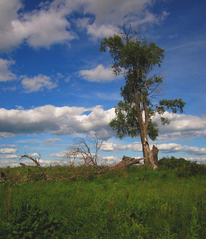 Одинокое древо - Павел Зюзин