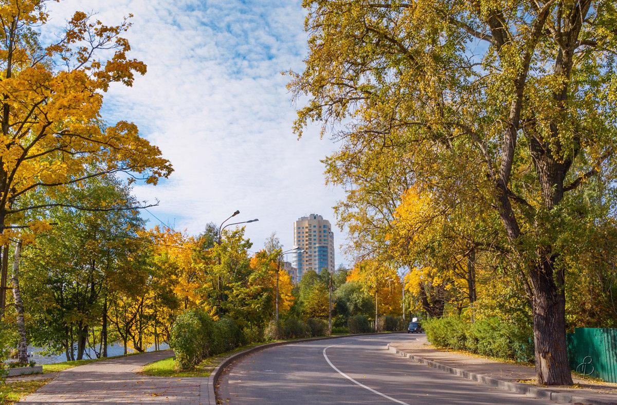 Городской пейзаж - Виталий