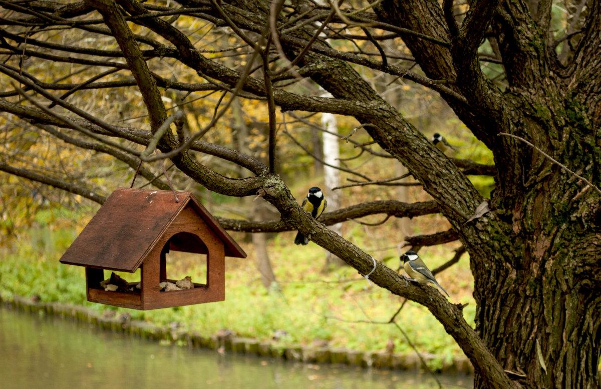 Осенние птички - Александр Аполонов