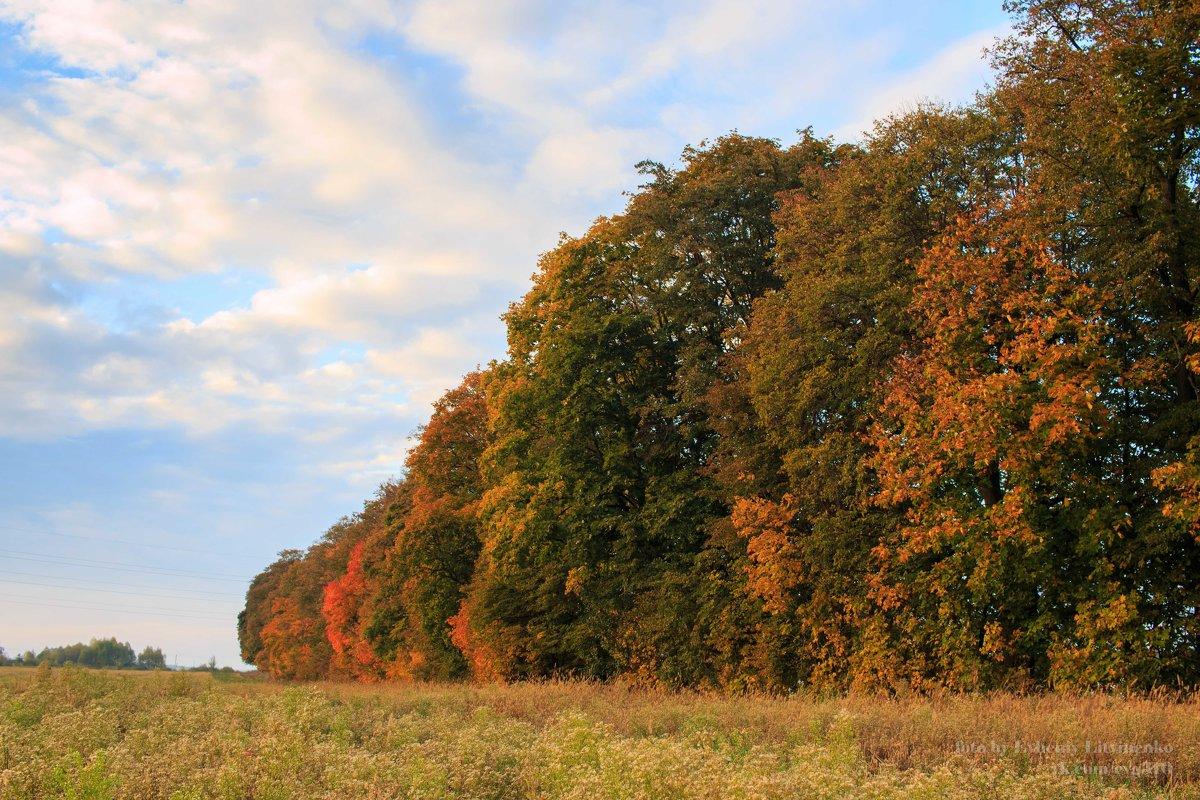 осенние полевые деревья - Евгений