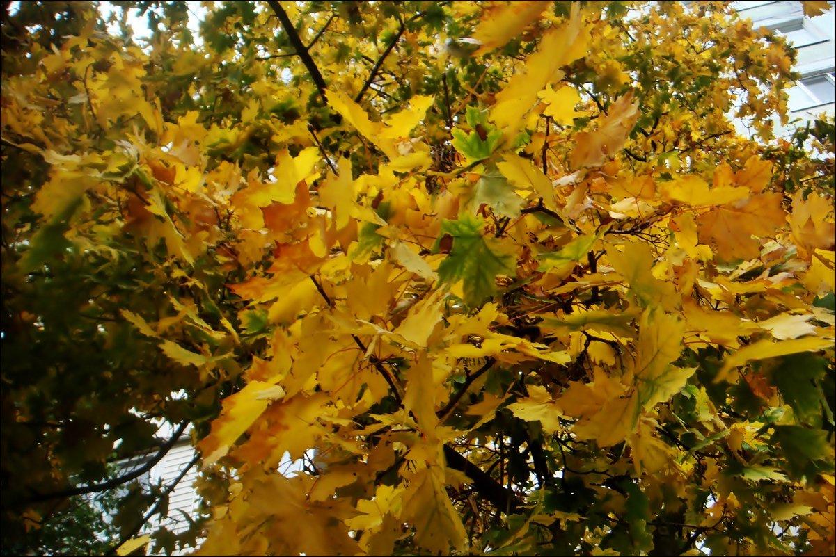 Солнечные листья - Нина Корешкова