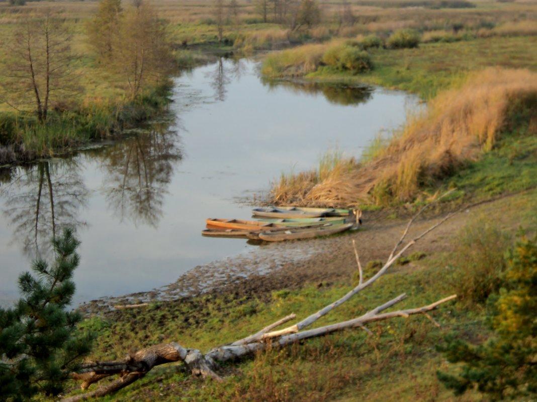 Река Битюг в октябре 2016 года. Вода ушла из реки куда то... - Ольга Кривых