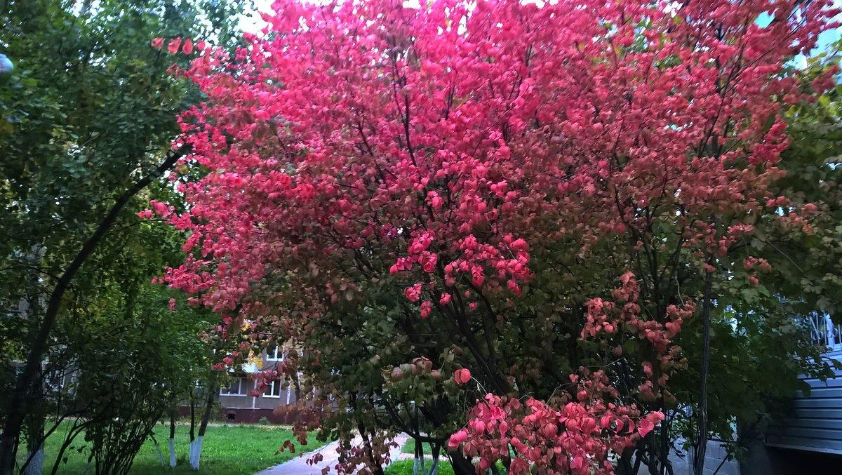 Вот такое осеннее дерево - Елена Семигина