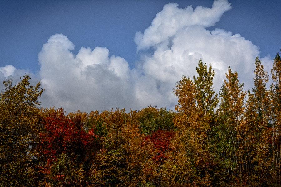 Осенние облака - Лариса Димитрова