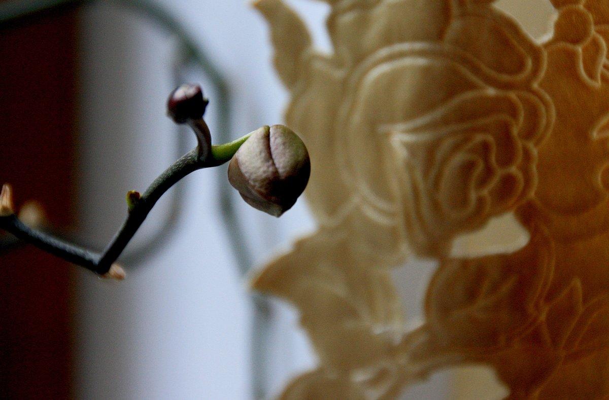 просто бутончик  орхидеи.. - Валерия  Полещикова