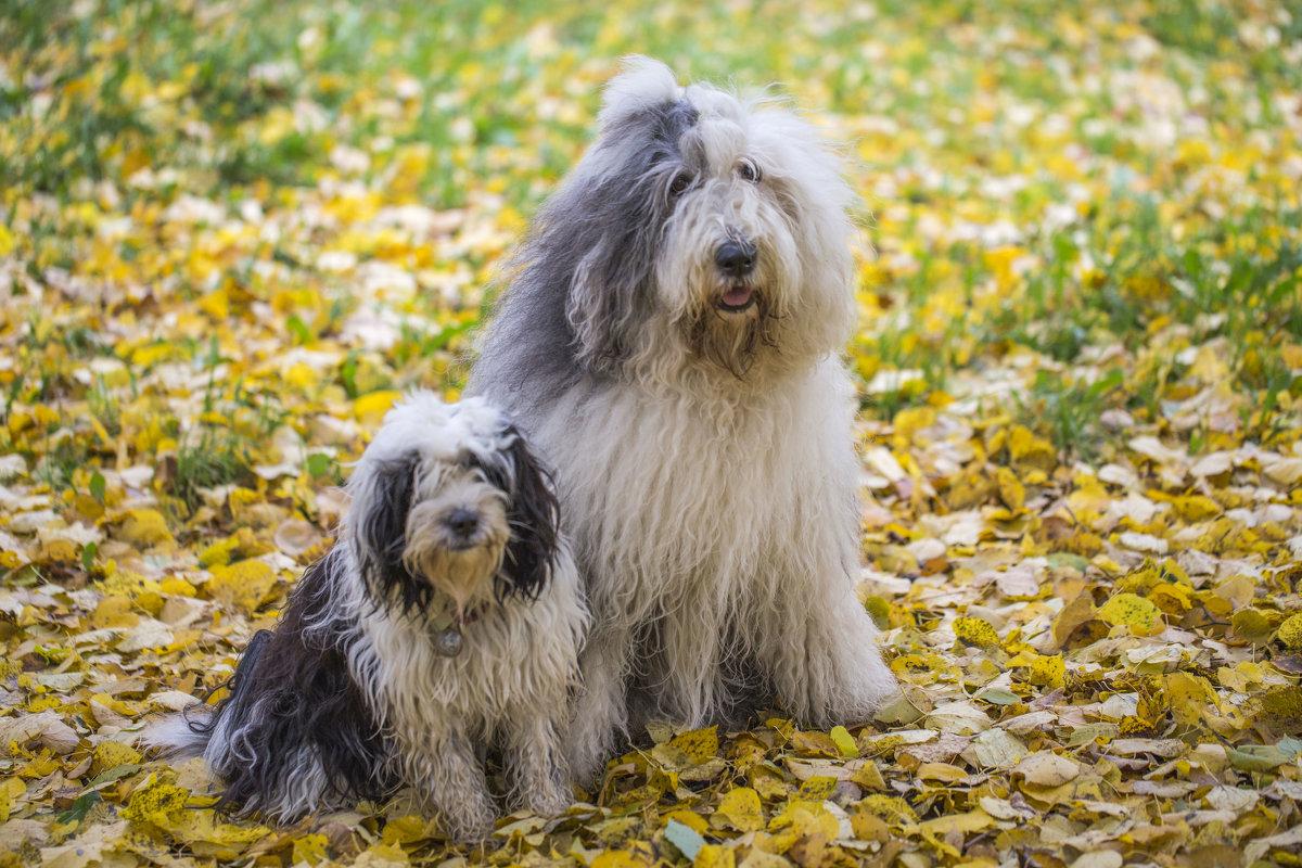 на ковре из желтых листьев... - Лариса Батурова
