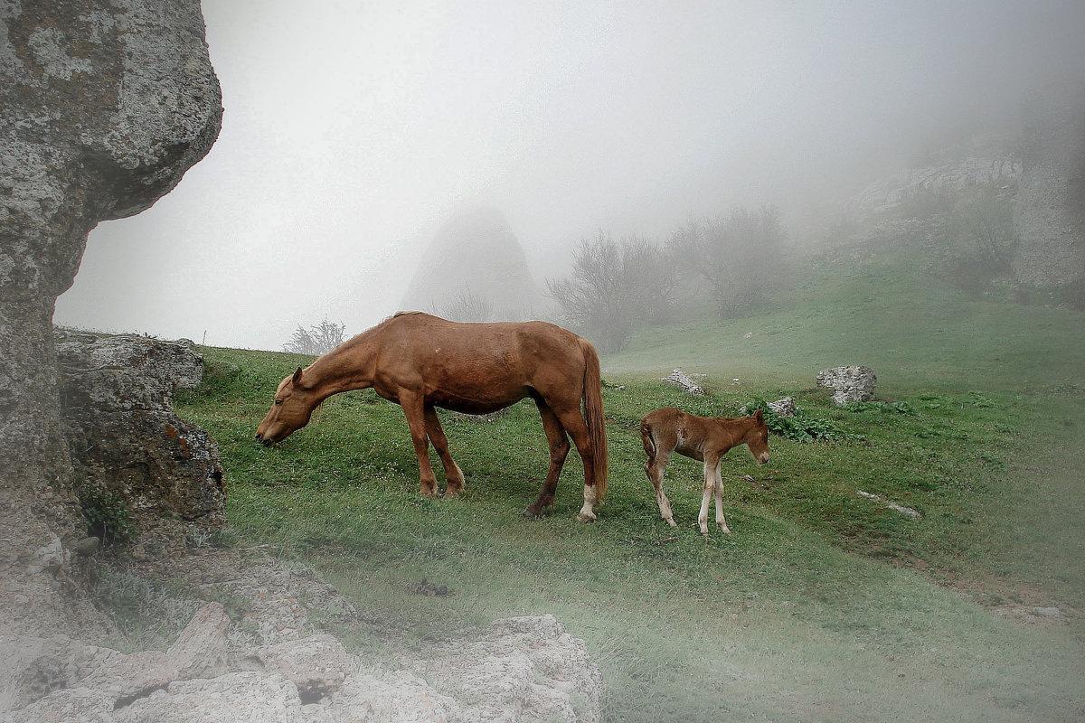 Туманное утро в горах - Ольга