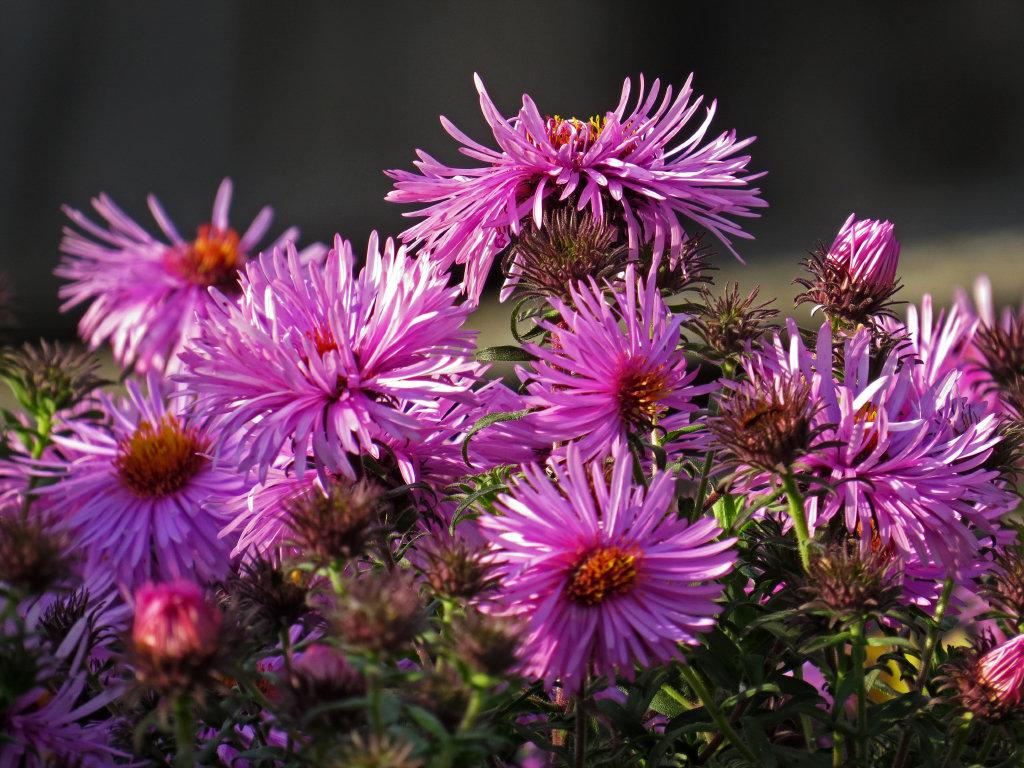 Последние цветы осени, так же как и самые первые весенние, особенно радуют нас… - Людмила Василькова
