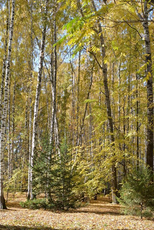 Осенний лес - grovs