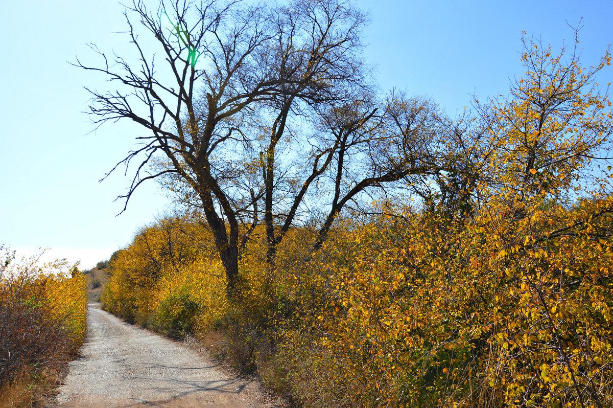 Дорога в Осень - Елизавета Царук