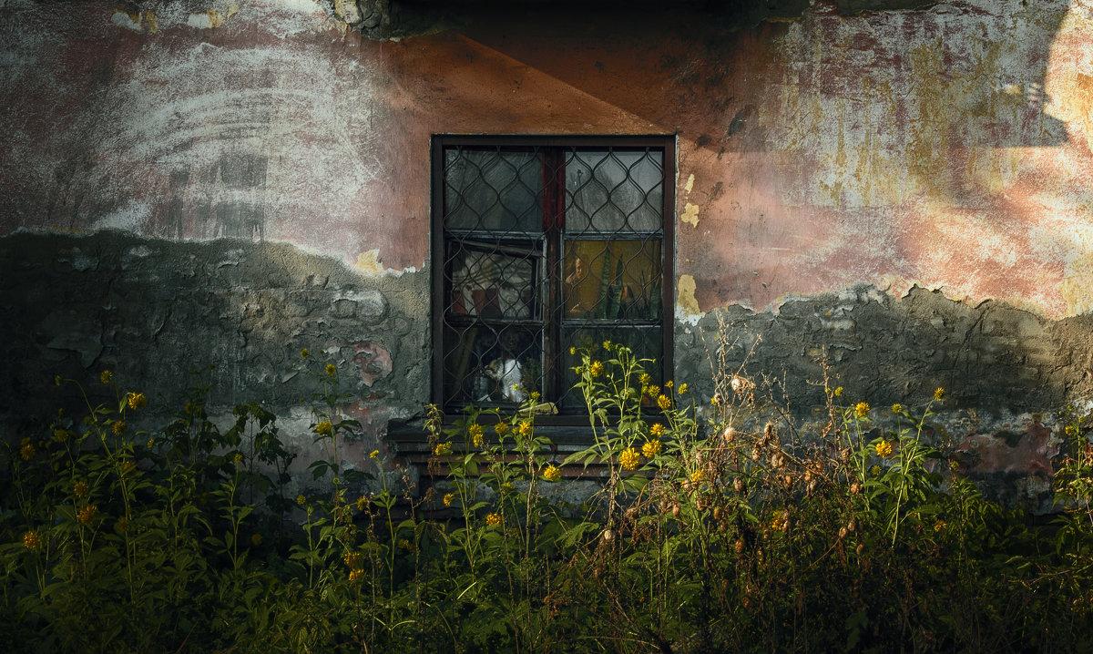 Окно в старом доме - Вадим Губин