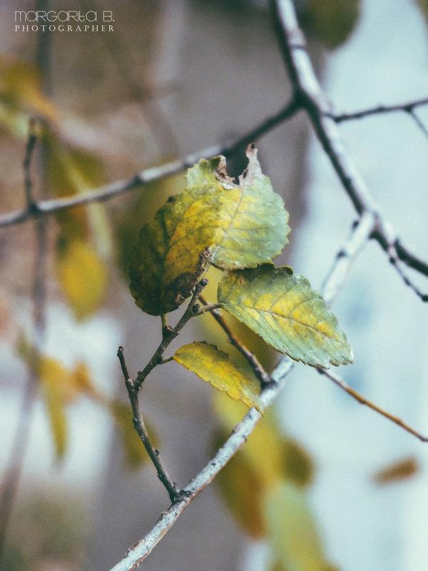 Осенние краски - Маргарита Б.