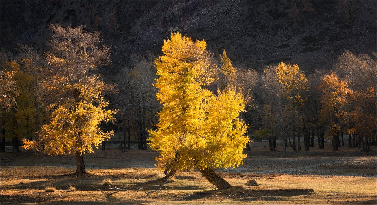 Золотая осень - Влад Соколовский