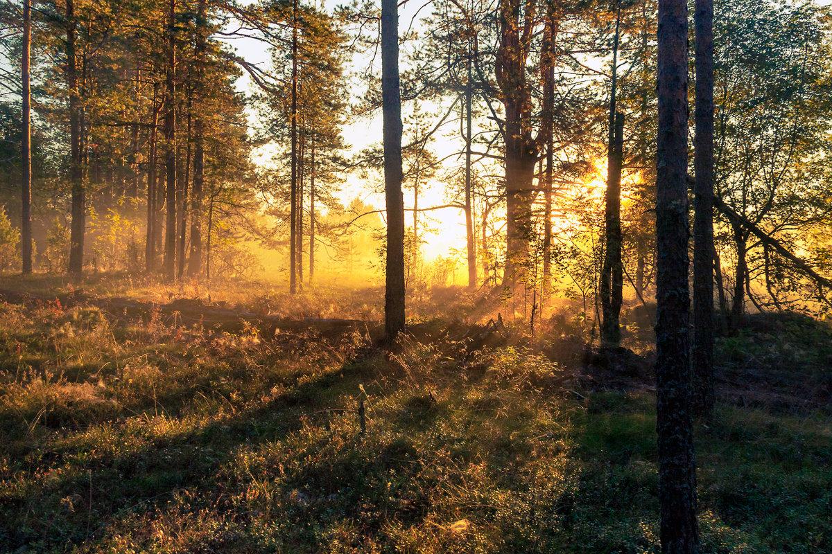 Лес проснулся - Владимир Миронов