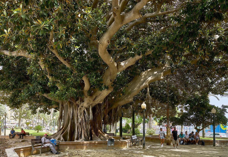 древо жизни - вадим