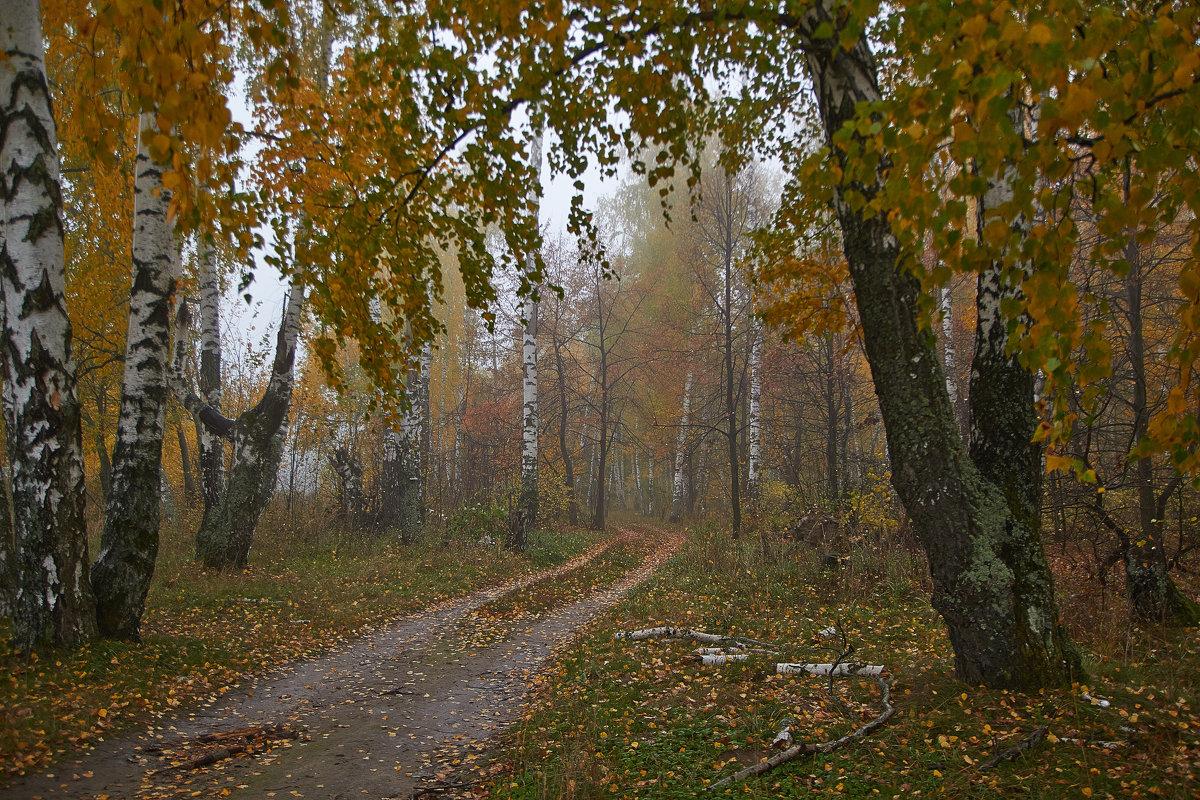 дорога в лес - Седа Ковтун