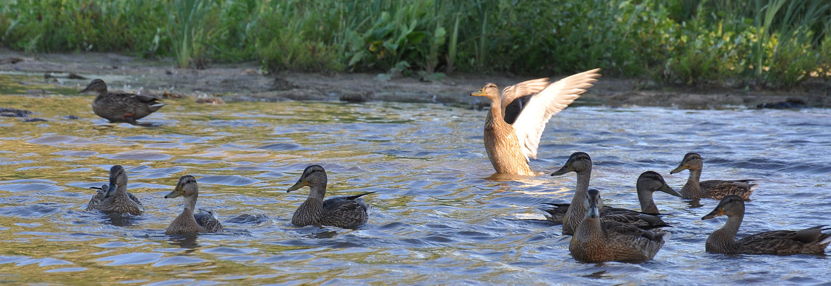 На озере - Алексей http://fotokto.ru/id148151Морозов