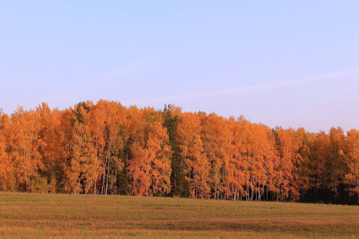 Осени краски - Татьяна Ломтева