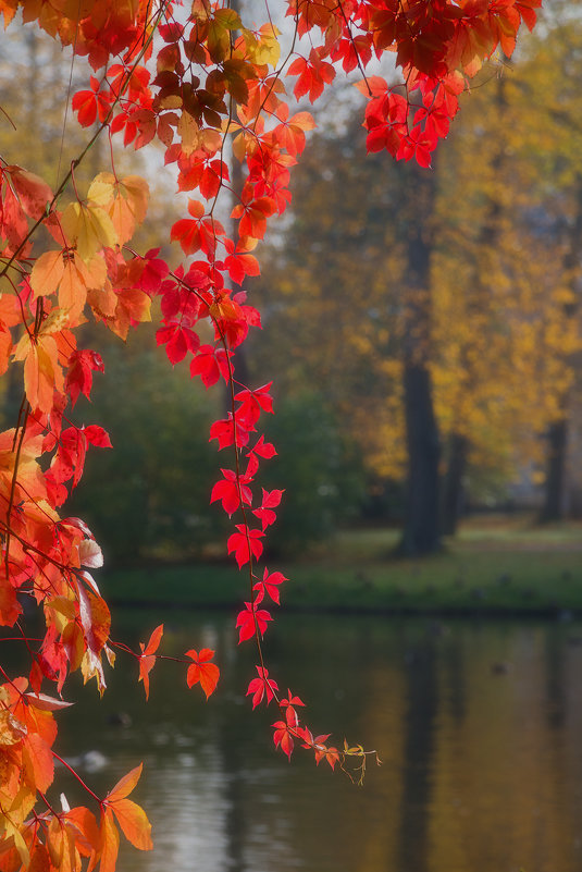 Пришла золотая осень. - Юрий