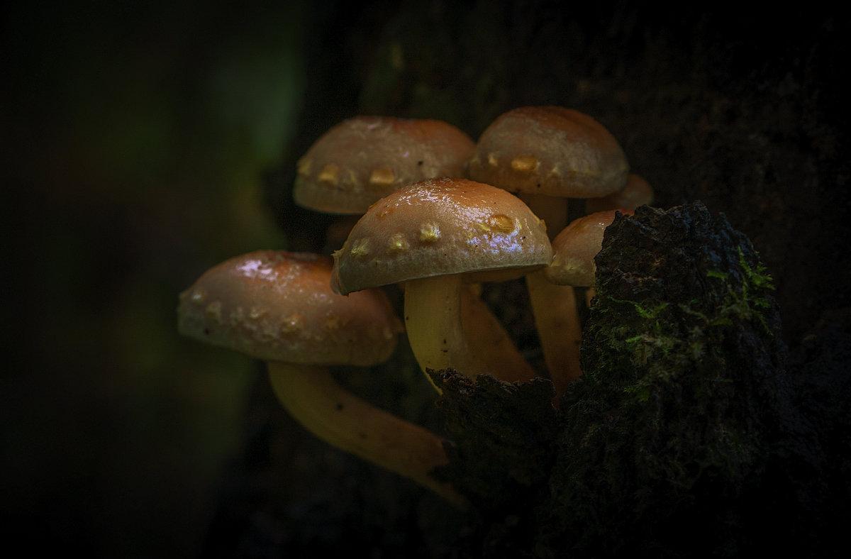 грибы на дереве - Алексей Строганов