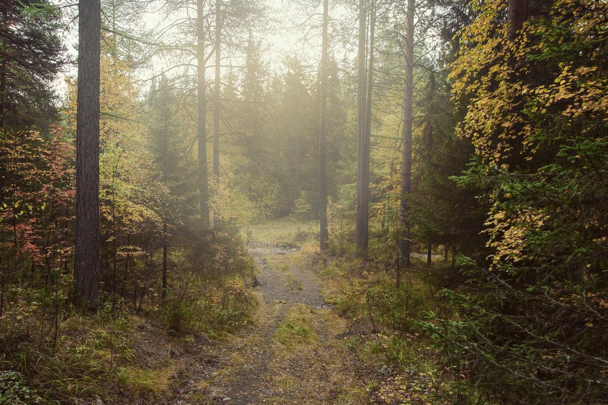 Осенний туман - vladimir