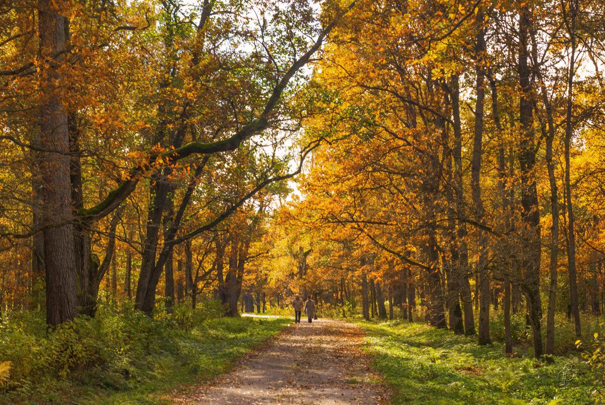 Осень на Тенистой аллее - Виталий