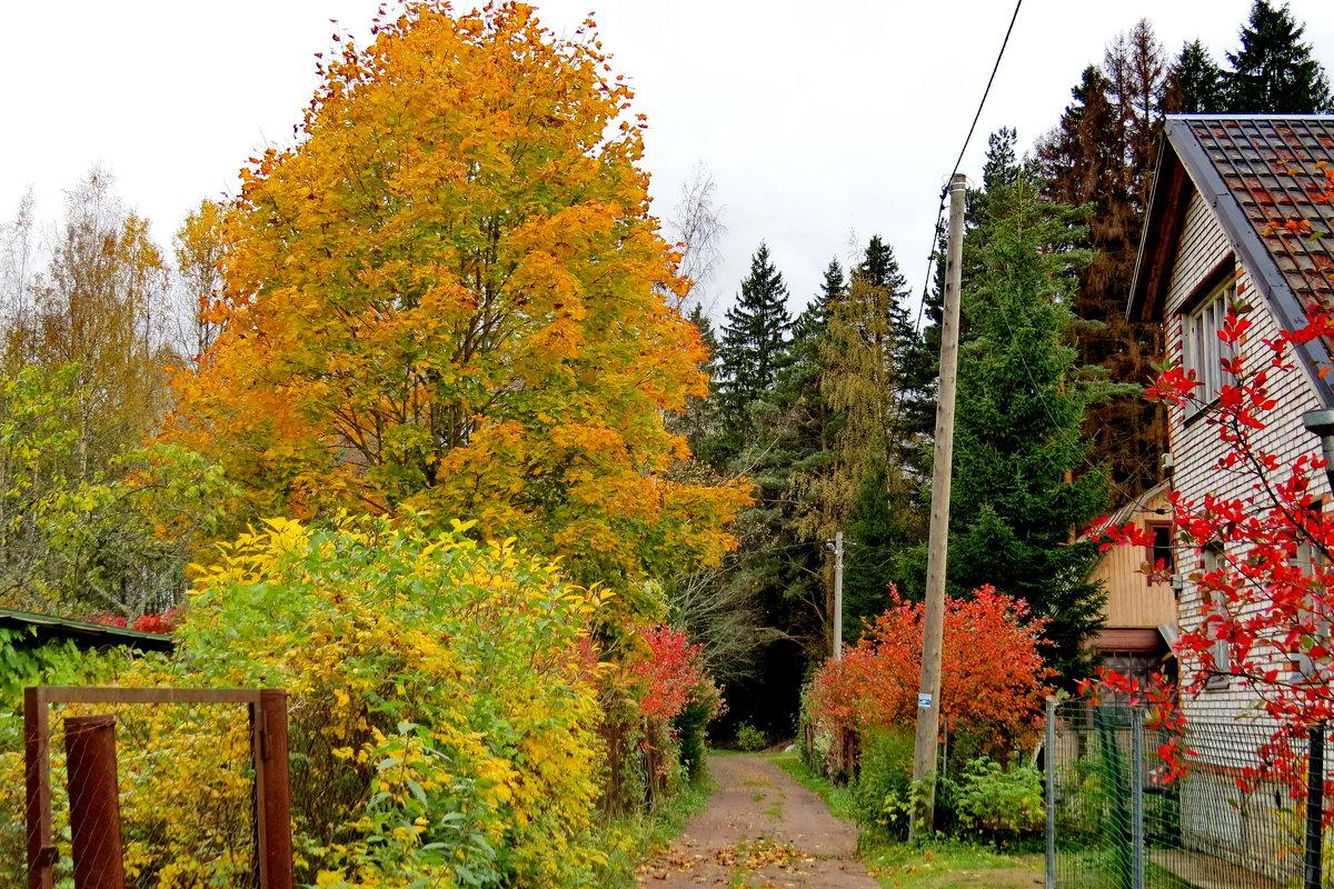 Осень на даче - Светлана