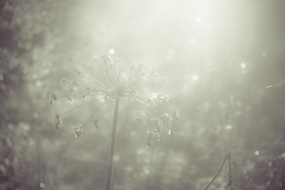 В тумане - Олег Фиедориенко