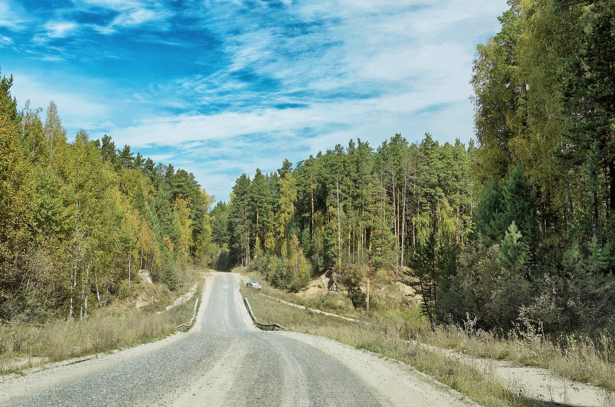 Дорога через лес - Дмитрий Конев
