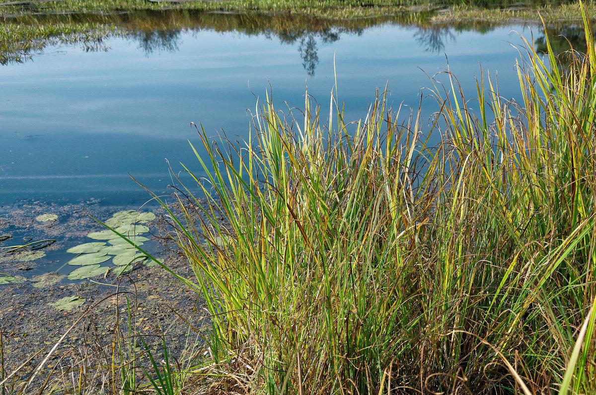 Трава на озере - Дмитрий Конев