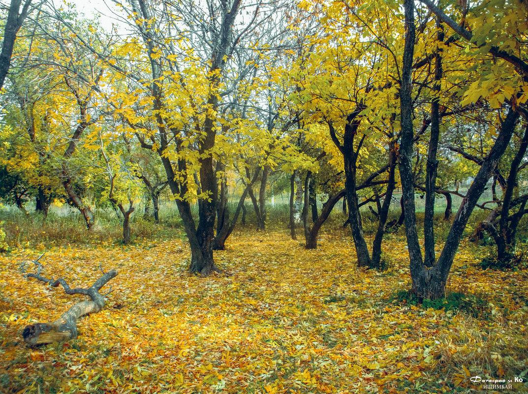 Осенний лес - Вячеслав Баширов