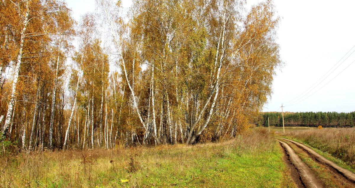 Осенняя полевая дорога. - Борис Митрохин
