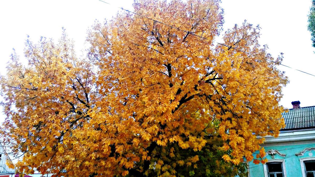 Осень - Татьяна Королева