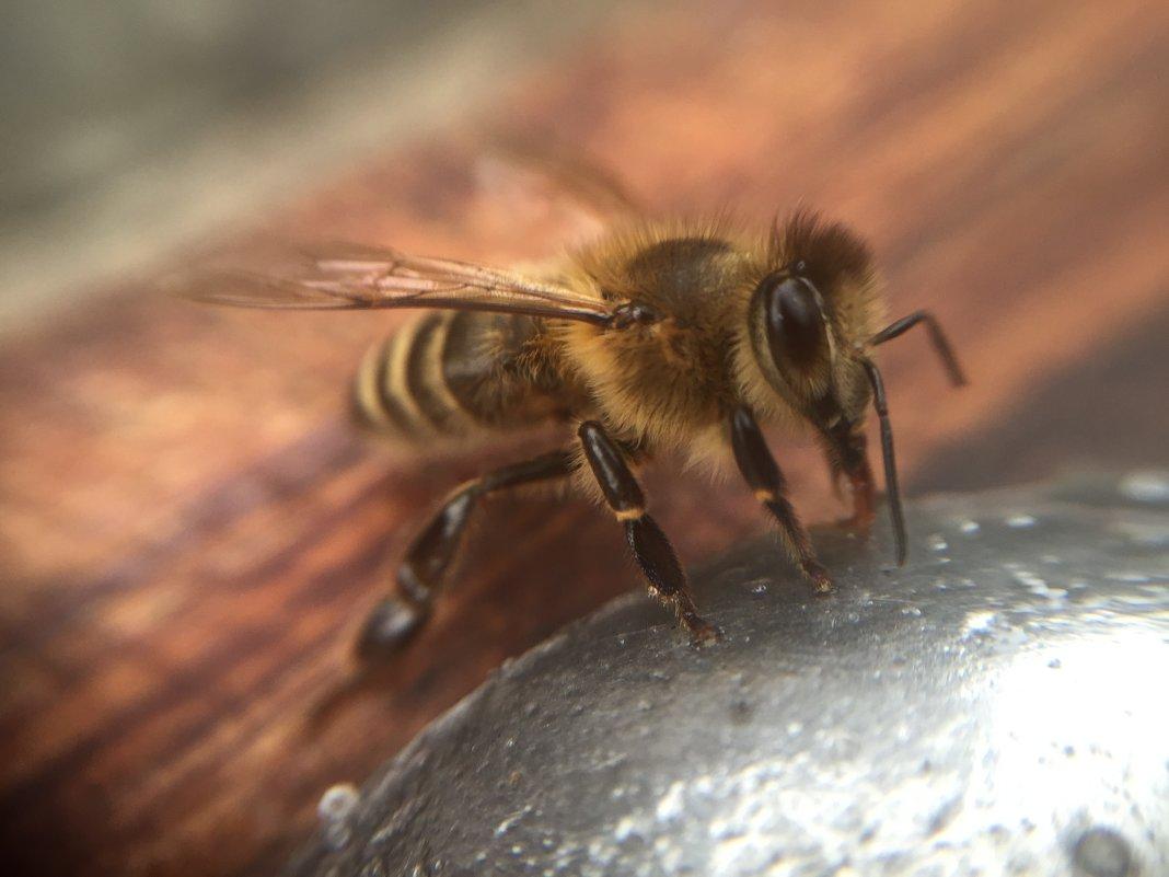 Просто пчелка - kristina
