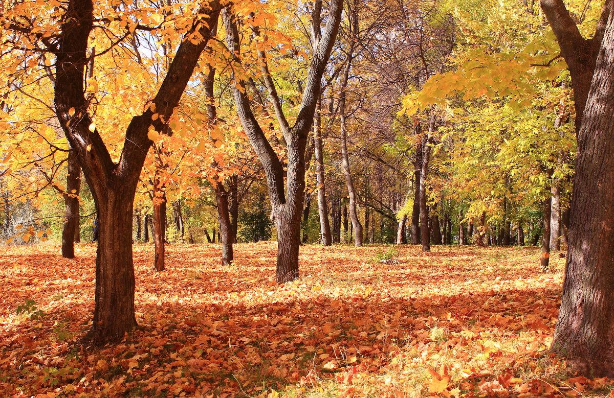 По ковру из желтых листьев - Татьяна Ломтева