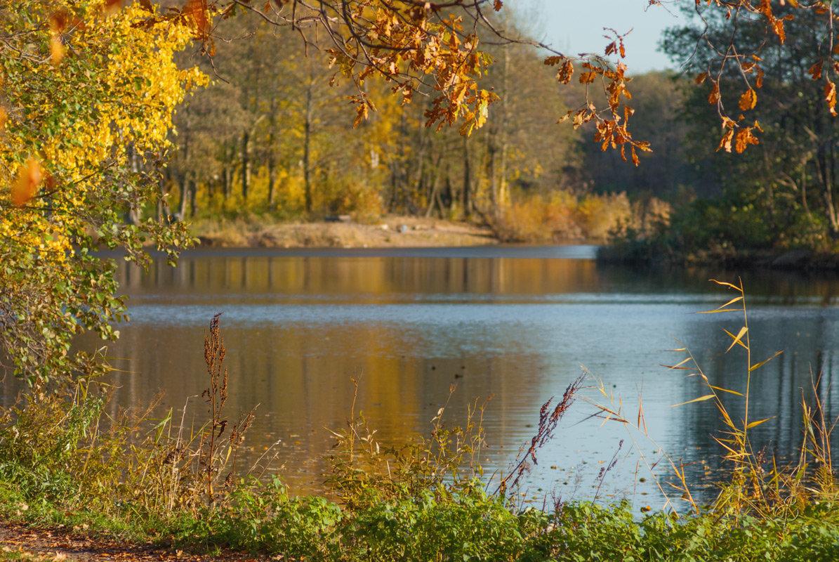 Осени грусть - Виталий