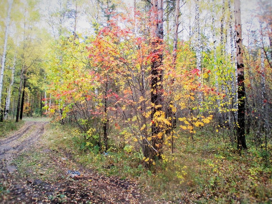 Осенний лес. - Valentina