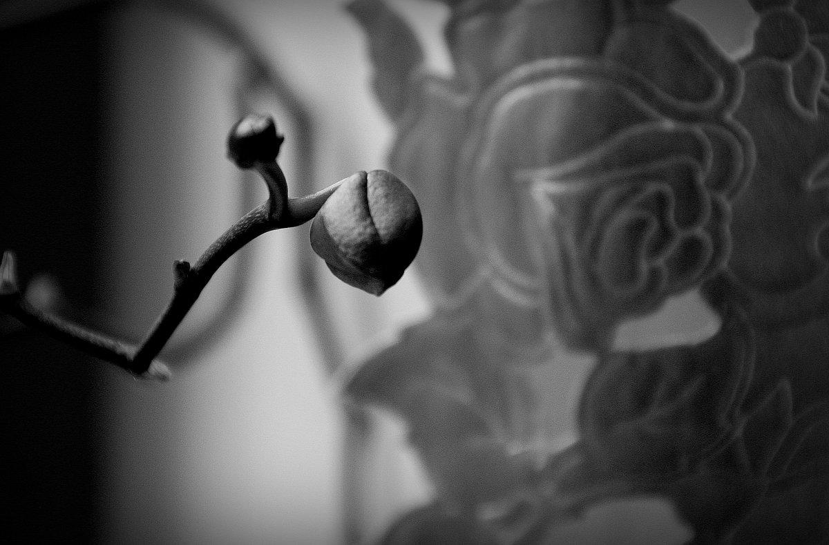 просто бутончик орхидеи.. 2 вар. - Валерия  Полещикова