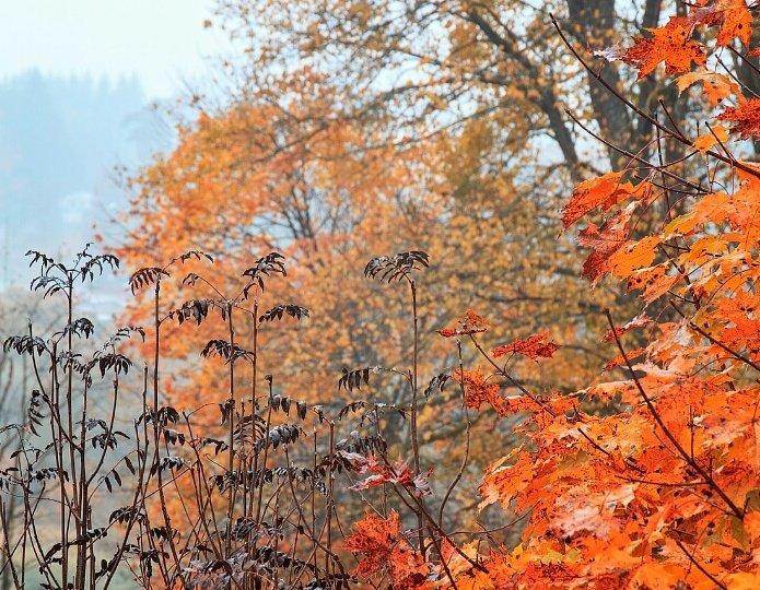 Краски осени - Sheri Day
