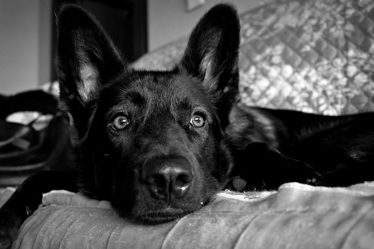 пес - татьяна якухина