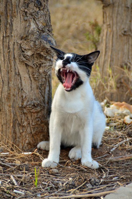 кошки Туниса (жрать даваааай!) - Евгений Фролов