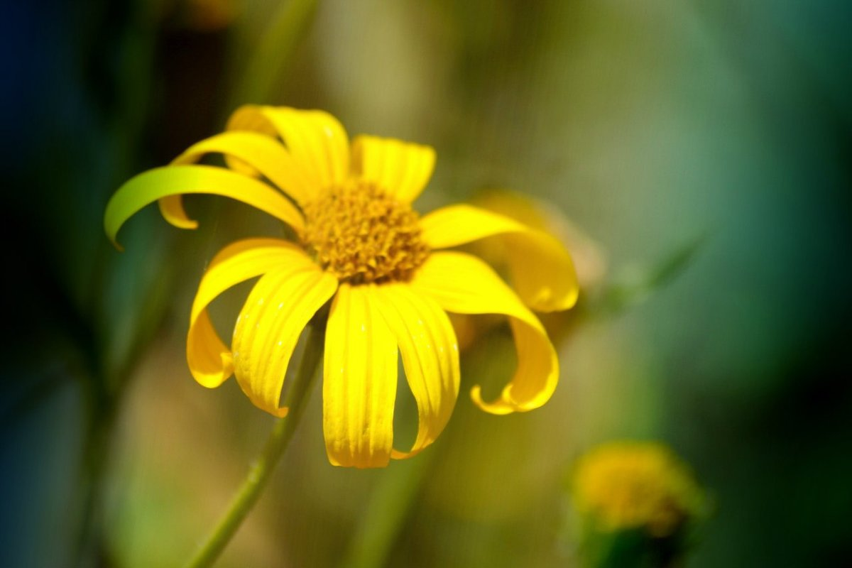 цветик семицветик - Кристина Громова