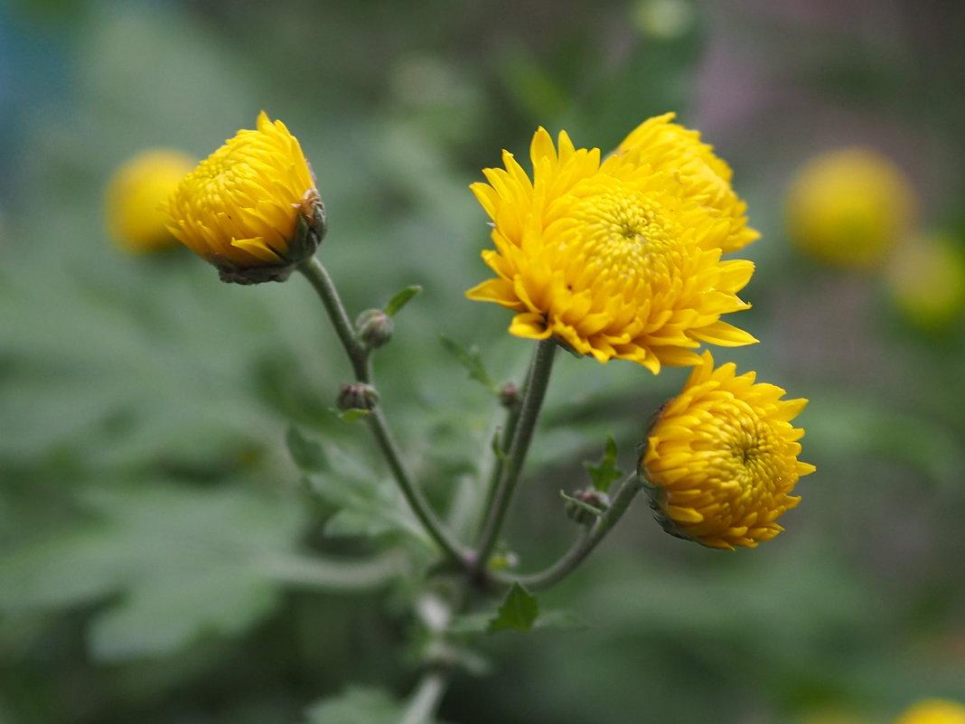 Осенние цветы - Игорь Касьяненко